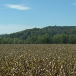 Cornfield, Jackson County, WV, Mid-Ohio Valley Region