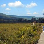 Boardwalk at Cranberry Glades near Hillsboro, WV, Pocahontas County, Allegheny Highlands Region
