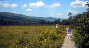 Boardwalk at Cranberry Glades near Hillsboro, WV, Pocahontas County, Allegheny Highlands Region