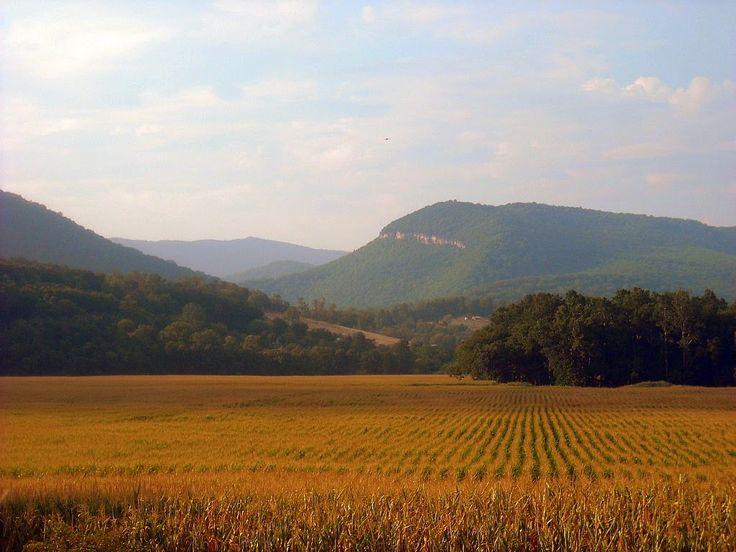 Cornfield near Upper Tract, WV, Pendleton County, Potomac Branches Region