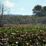 Green Bottom Wildlife Management Area, Cabell County, Metro Valley Region