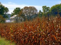 Cornfield near Murraysville, WV, Jackson County, Mid-Ohio Valley Region