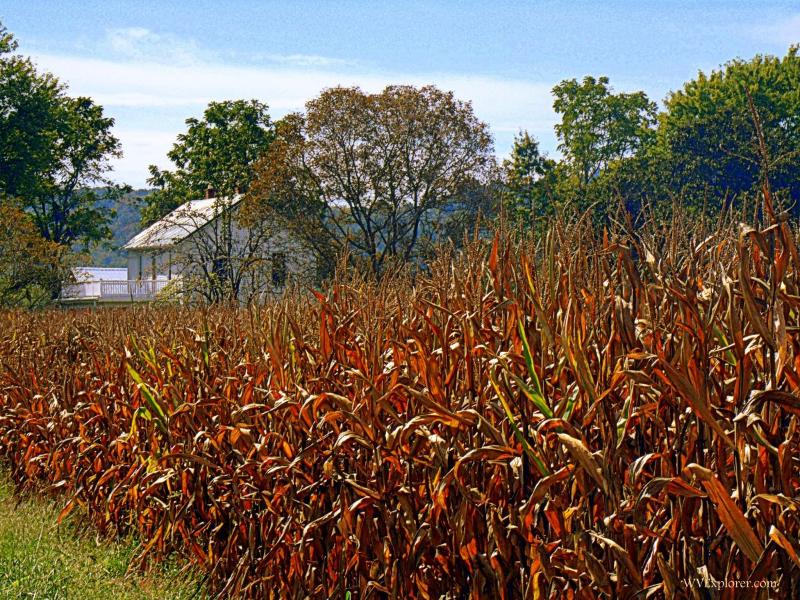 Farmstead near Duncan, WV, Jackson County, Mid-Ohio Valley Region