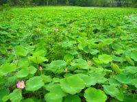Pond at McClintic Wildlife Management Area, Wildlife Management Areas, Mid-Ohio Valley Region