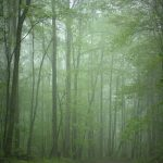 Misty woodland near Pluto, WV, Raleigh County, New River Gorge Region