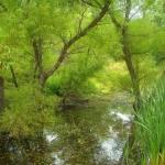Willows near Wallback, WV, Wallback Wildlife Management Area, WIldlife Management Areas, Heartland Region