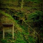 Buffalo Park near Webster Springs, WV, Webster County, Allegheny Highlands Region