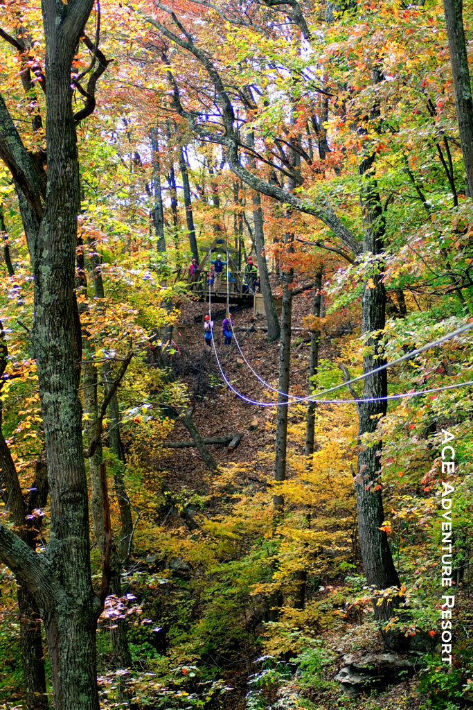 Canopy tour in autumn