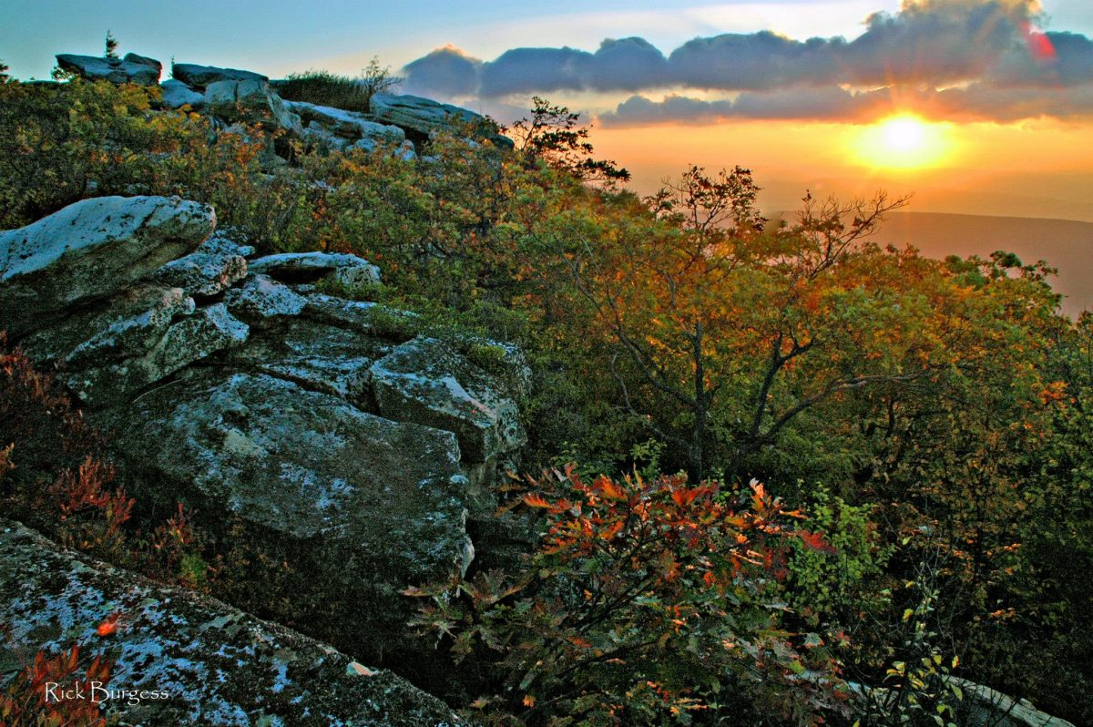 Sunrise at Bear Rocks Preserve, Dolly Sods Wilderness, Allegheny Mountains Region