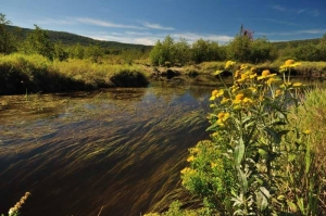 Blackwater Trail in Canaan Valley, WV, Tucker County, Allegheny Highlands Region, Ed Rehbein