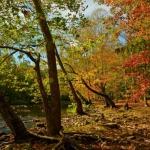 Autumn on Bluestone River, Bluestone National Scenic River, Bluestone Region