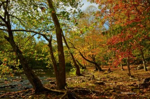 Autumn on Bluestone River, Bluestone National Scenic River, Bluestone Region