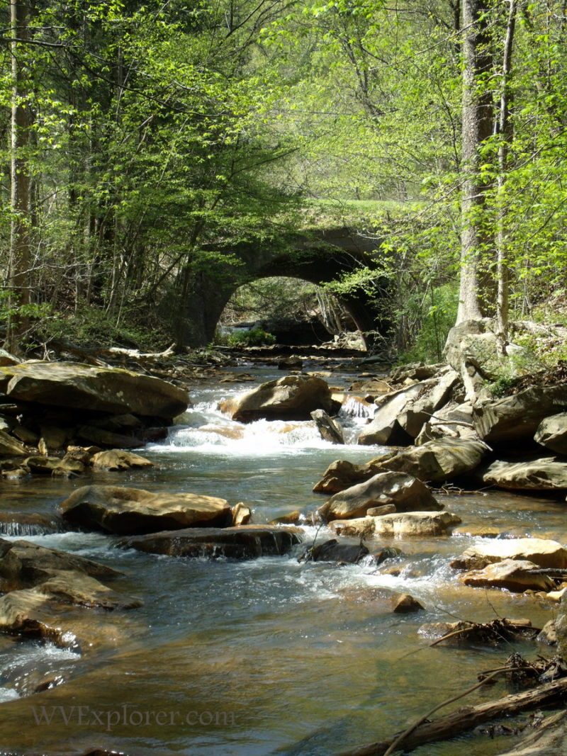 Spring on a Boone County stream