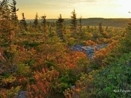 Afternoon at Dolly Sods Wilderness, Monongahela National Forest, National Parks