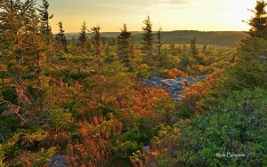 Dusk falls on the Dolly Sods Wilderness, Monongahela National Forest, National Parks