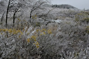 Ice at Dolly Sods Wilderness, Monongahela National Forest, Allegheny Highlands Region