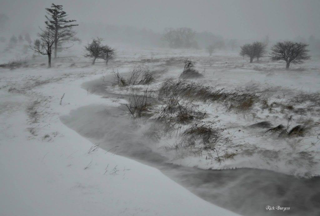 Driven snow, White Grass, Allegheny Highlands Region