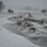 Driven snow, White Grass, Allegheny Highlands Region