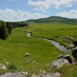 Pasture near Gandy Creek, Sinks of Gandy, WV, Randolph County, Allegheny Highlands Region