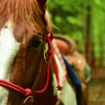 Horsebacking on New River Gorge, Adventures on the Gorge