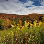 Autumn in the Allegheny Mountains, Ed Rehbein, Allegheny Highlands Region