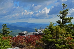 Patterson Creek Mountain from Bear Rocks Preserve, Dolly Sods Wilderness, Potomac Branches Region