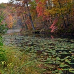 Autumn at Plum Orchard Lake Wildlife Management Area, Pax, WV, New River Gorge Region