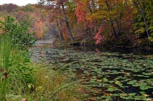 Autumn at Plum Orchard Lake Wildlife Management Area, Pax, WV, New River Gorge Region