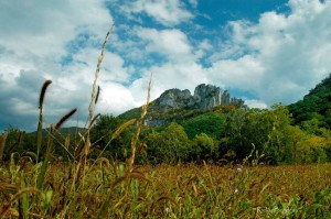 Seneca Rocks from Pasture, Pendleton County, Potomac Branches Region