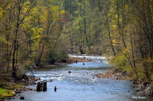 Fishing on Shavers Fork of Cheat River, Randolph County, Allegheny Highlands Region