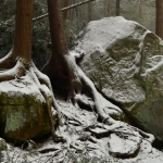 Hemlock roots at Blackwater Falls State Park