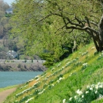 Spring along the Kanawha River, Charleston, WV, Kanawha County, Metro Valley Region