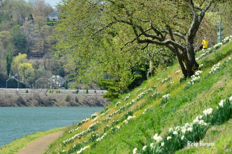 Spring along the Kanawha River