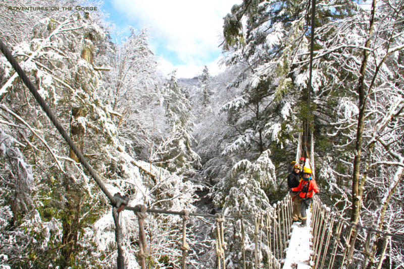 Guests on canopy tour in winter