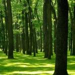 Grove on Blennerhassett Island, Blennerhassett Island State Park, Mid-Ohio Valley Region