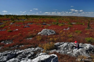 Artist on Dolly Sods, Monongahela National Forest, Tucker County, Allegheny Highlands Region