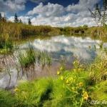 Freeland Loop Trail, Canaan Valley National Wildlife Refuge, Tucker County, Allegheny Highlands Region