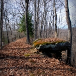 Tea Table on Dry Ridge, Morris Creek Wildlife Management Area, Kanawha County, Metro Valley Region