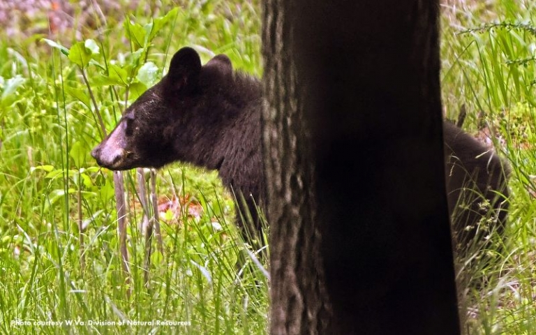 Even in suburbs, unprotected food sources attract bear