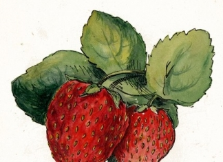 May is strawberry season, West Virginia Strawberry Festival