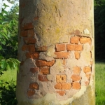 Brickwork revealed in column at Blue Sulphur Springs