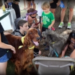 Irish Setter, Irish Wolfhound, Dublin Irish Festival 2014
