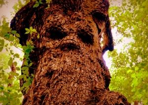 Witchy Tree near Witcher Creek WV