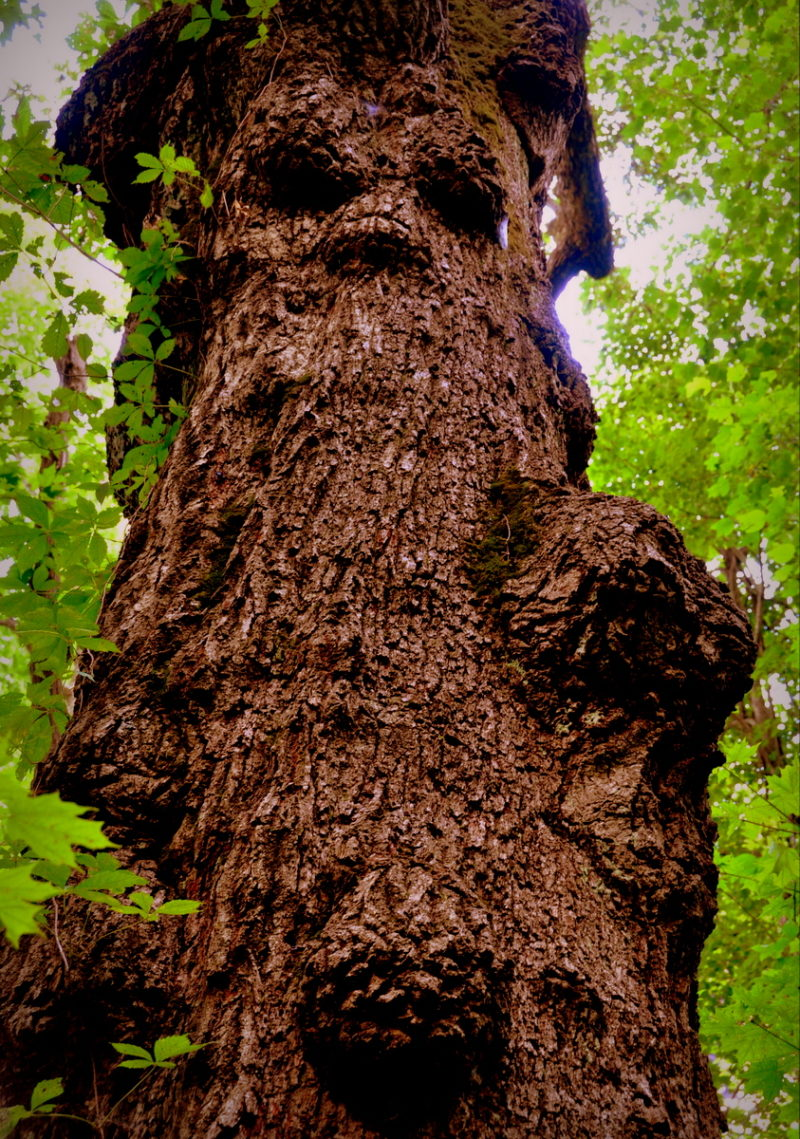 Witchy Tree, Kanawha County, West Virginia (WV)