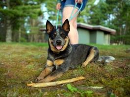 Pets at Pipestem State Park