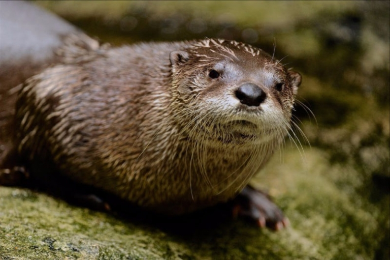 W.Va. DNR: be wary when encountering river otters