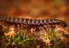 Wetzel County Worm Invasion
