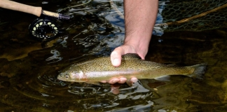 Friday and Saturday trout stockings will begin March 2 in waters within and near selected West Virginia state parks.