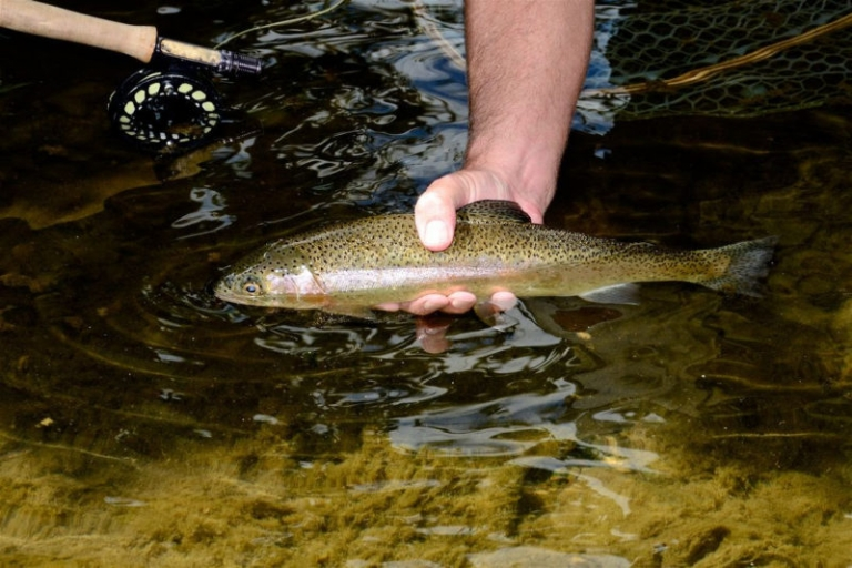 W.Va. DNR publishes Friday and Saturday trout stockings
