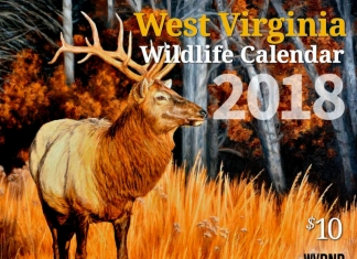 Re-introduced to West Virginia, an elk is featured on the front of the new W.Va. DNR wildlife calendar.